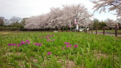 도다 카 원 봄